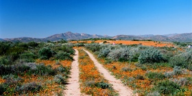 Explore Namaqualand